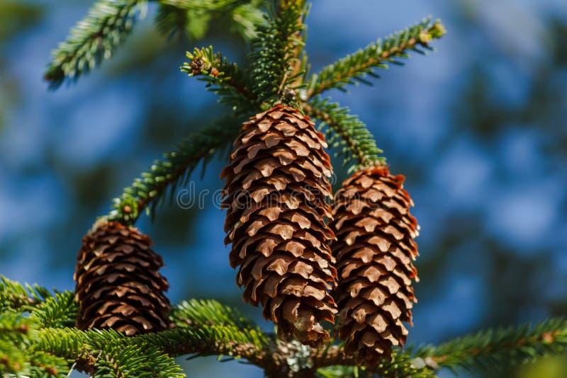 Garbki Na drzewie obrazy stock
