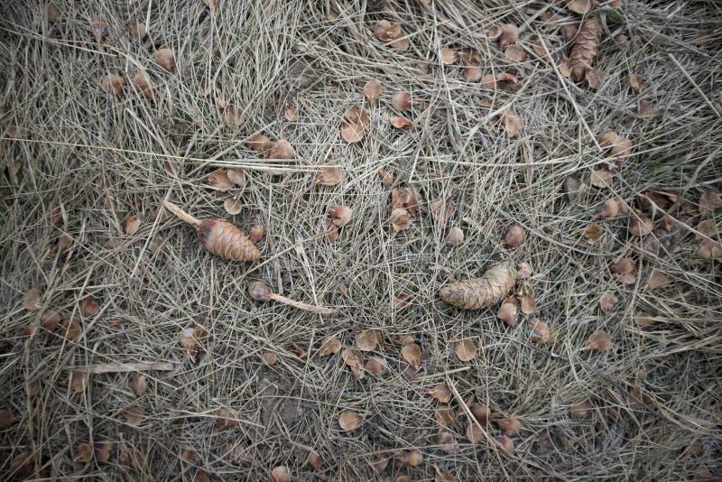 Garbki po wiewiórki fotografia stock