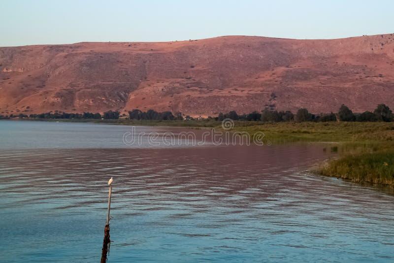 Garceta encaramada en un poste en el mar de Galilea durante salida del sol fotos de archivo