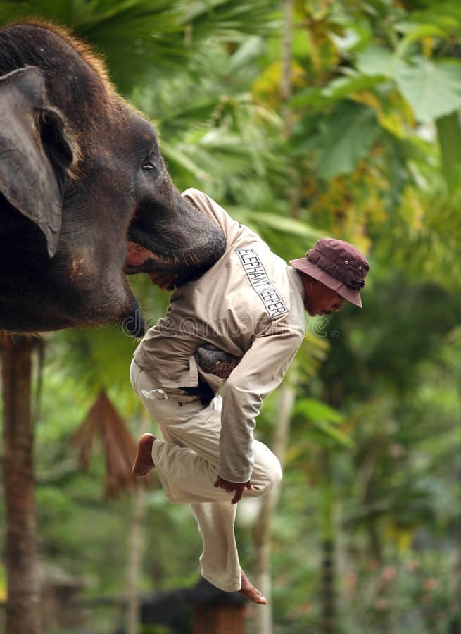 Garde d'éléphant photo stock