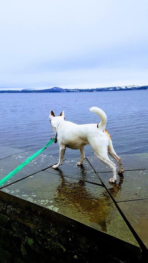 Garde Dog photos stock