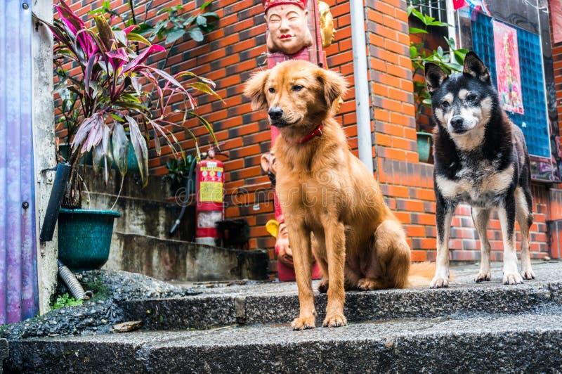Garde Dogs images libres de droits