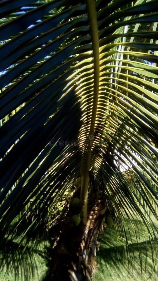 Gardem棕榈树 图库摄影