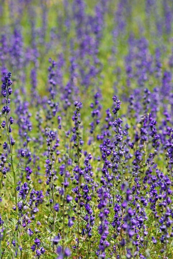 Download Garden stock image. Image of bright, plant, landscape - 11636115