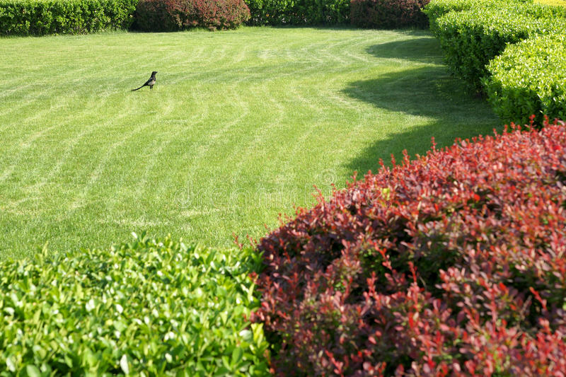 Download Garden stock photo. Image of magpies, lawn, park, birds - 14300898