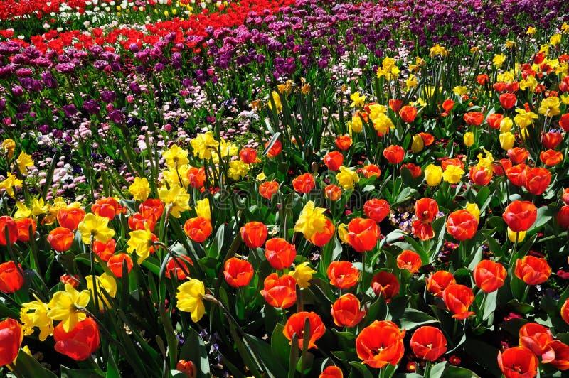 Download Garden stock image. Image of flowerbed, botany, nature - 17319547