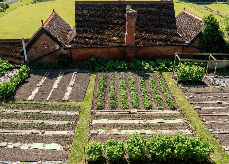 Allotments and vegetables in Shrewsbury, Shropshire royalty free stock photo