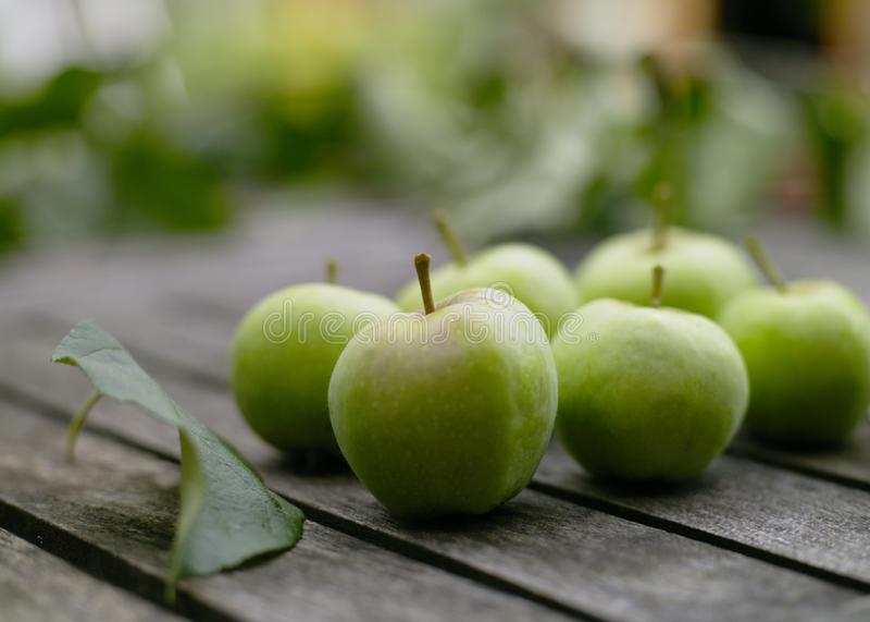 Garden Apples stock images