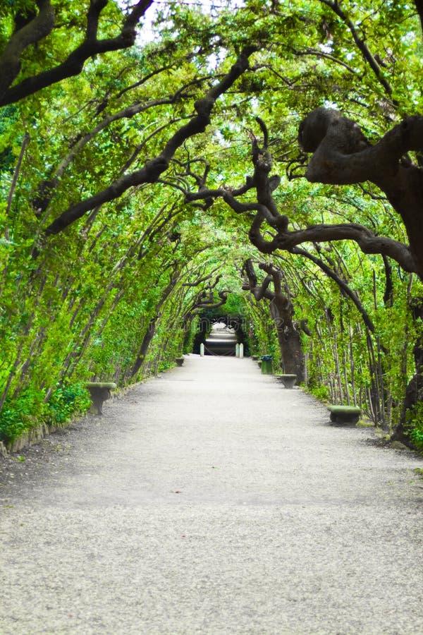 Garden arbor tunnel stock photos