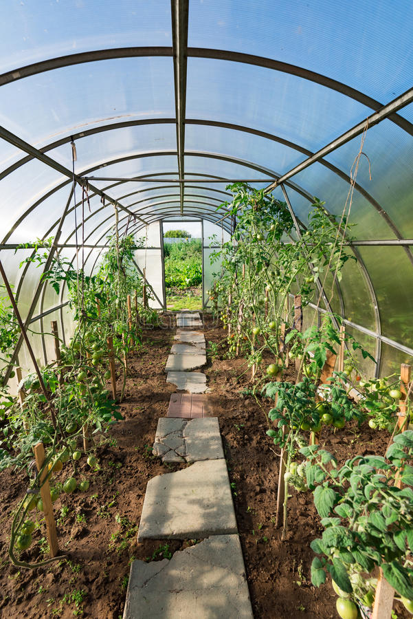 In the garden arched greenhouse royalty free stock photography