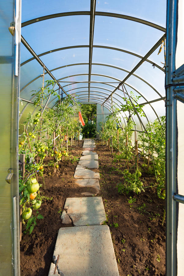 In the garden arched greenhouse royalty free stock photos