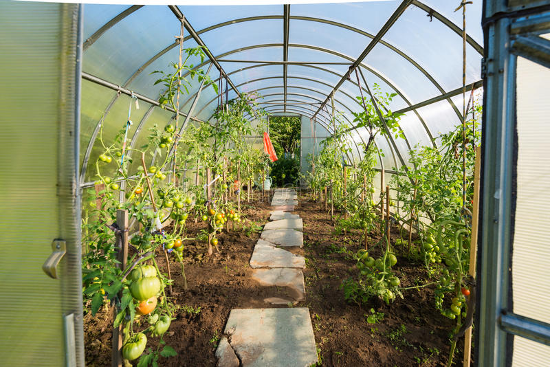 In the garden arched greenhouse royalty free stock images