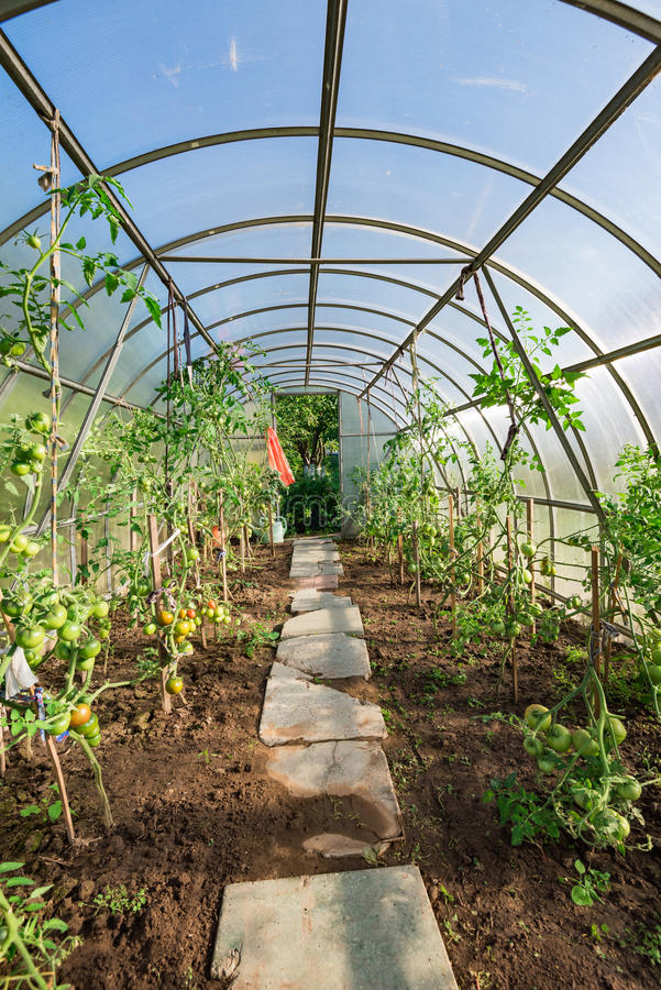 In the garden arched greenhouse royalty free stock image