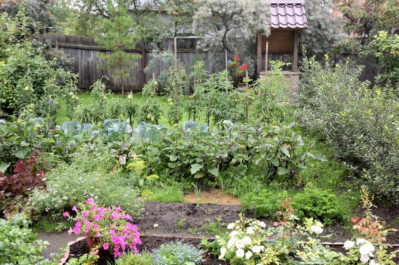 Garden area with the beds. Omsk region, Russia royalty free stock photography