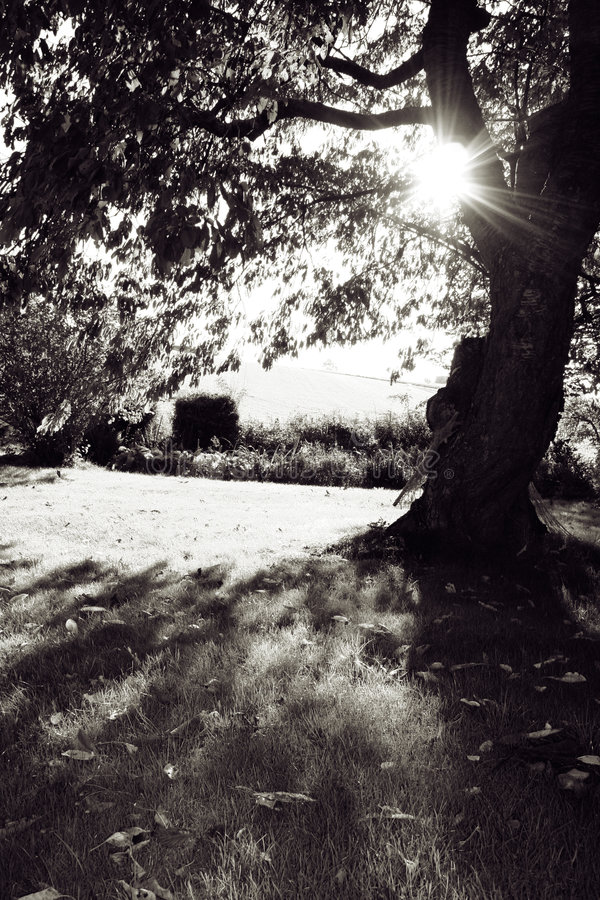 Download Garden Autum sun stock photo. Image of lawn, landscape - 1417986