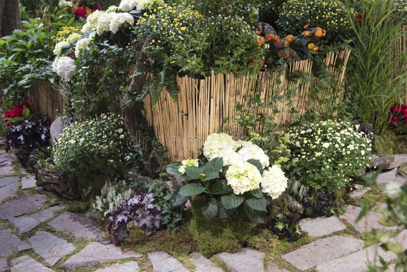 Garden autumn flowers stock photos
