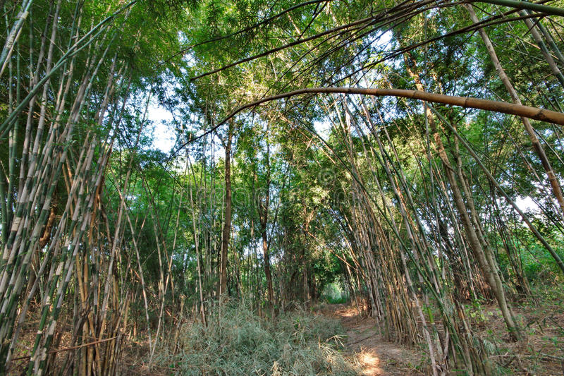 Garden bamboo canes that grow naturally release. The drip irrigation system stock images