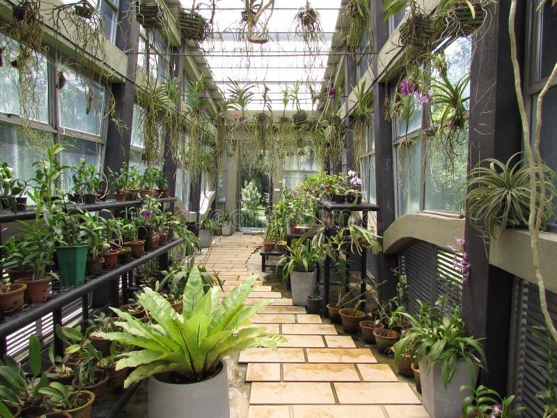 Garden beautiful gampha. Garden future beautiful please in gampha Sri Lankans natural forast stock photo
