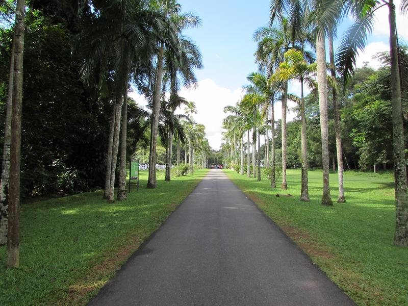 Garden in beautiful please Sri Lanka. Garden  future beautiful  please in gampha Sri Lankans stock photography