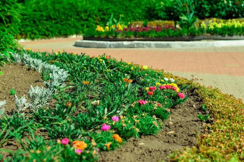 Garden bed with different colors flowers in summer.  stock photo