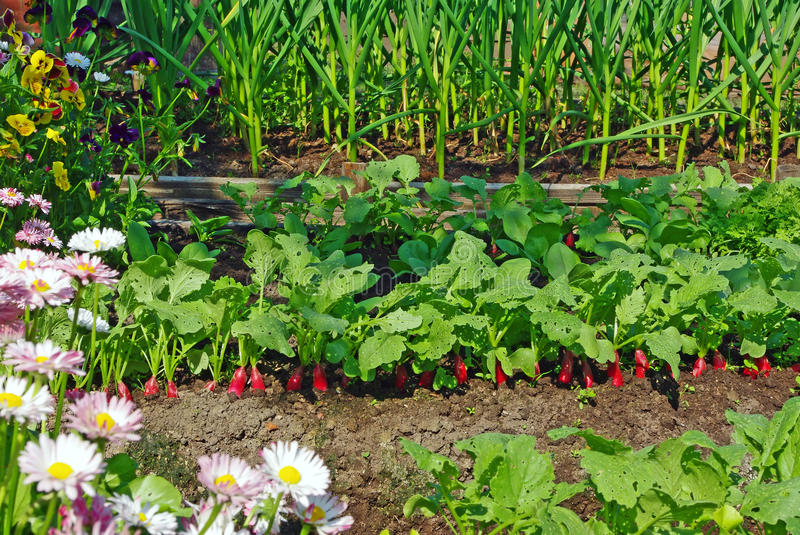 Download Garden Bed And Flowers Stock Images - Image: 23284354