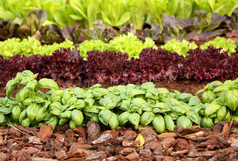 Garden Bed With Vegetables And Herbs Royalty Free Stock Photo