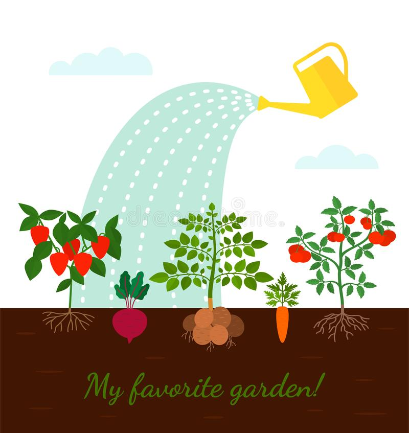 Garden beds with root vegetables. concept of harvest and ecological and organic products. Flat vector illustration in a cartoon style on a white background vector illustration