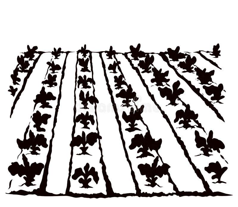 Garden beds. Vector drawing vector illustration