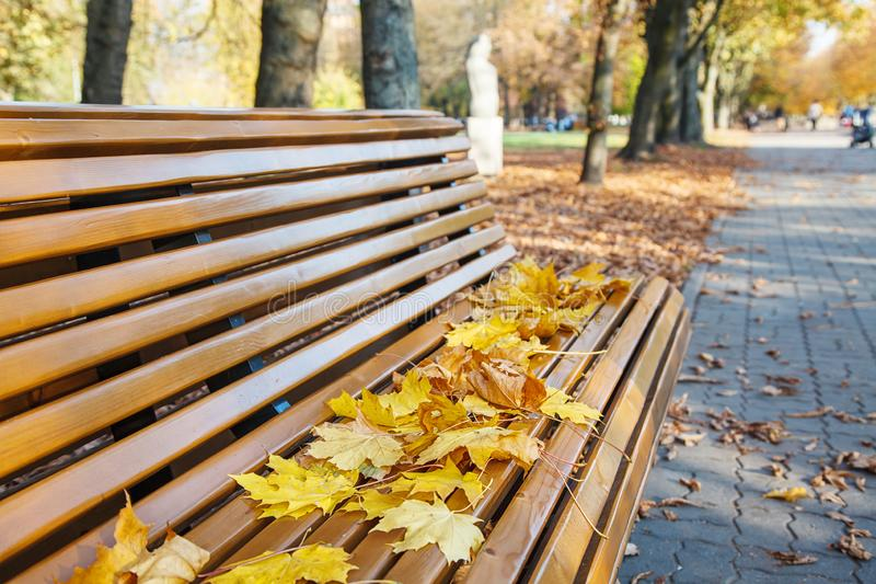 Garden bench with yellow leaves in autumn stock image