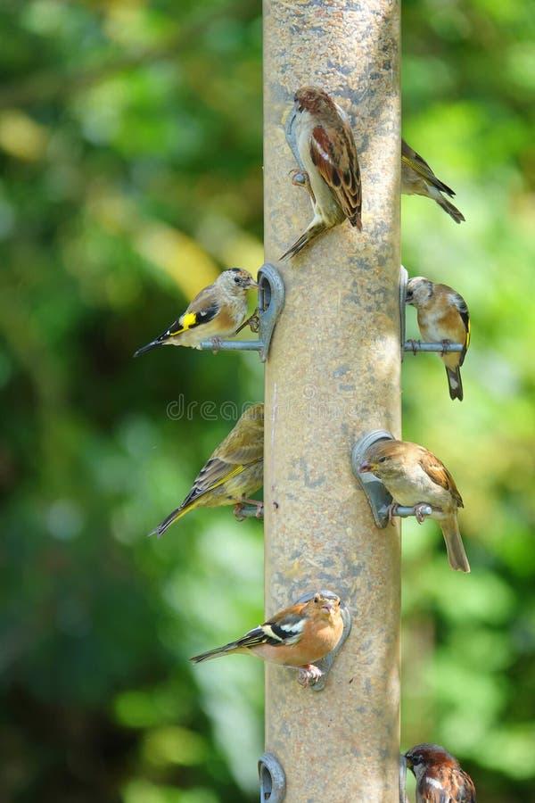 Garden birds on bird feeder royalty free stock photos
