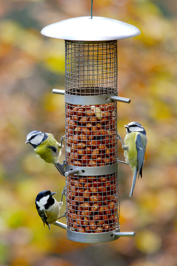 Free Garden Birds On Feeder Stock Photography - 4161392