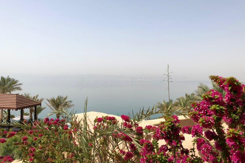 Garden overlooking the Dead Sea in Jordan. Garden with blooming flowers overlooking the Dead Sea in Jordan royalty free stock photo