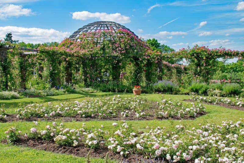 Garden, Botanical Garden, Plant, Vegetation stock image