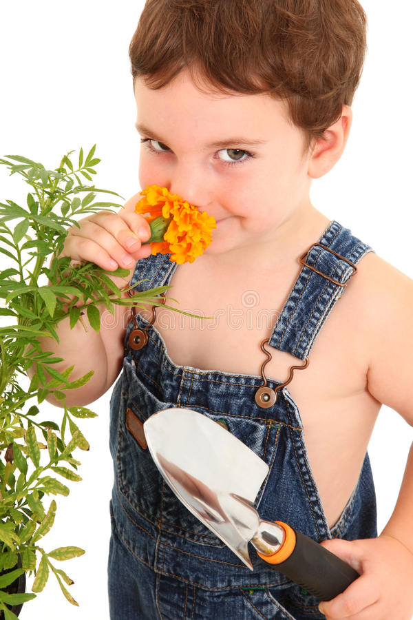 Download Garden Boy stock photo. Image of dungarees, overalls - 15098116