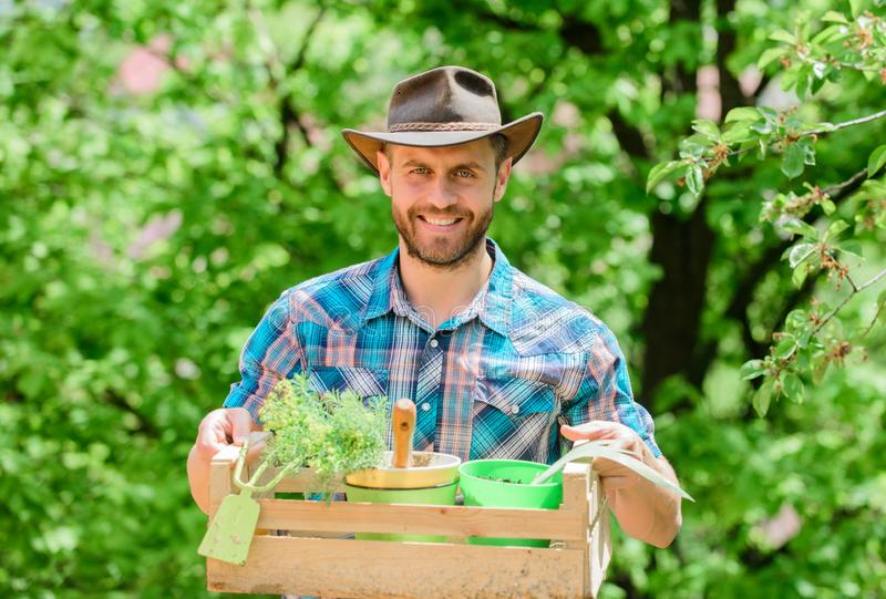 Garden care. Mature farmer man planting plants. Planting season. Bearded gardener guy hold box with flower pot and hoe royalty free stock images