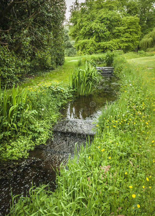 Download Garden Cascade stock photo. Image of flowing, grass, buttercup - 33761952