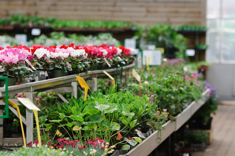 Download Garden center stock photo. Image of stock, tables, racks - 19567524