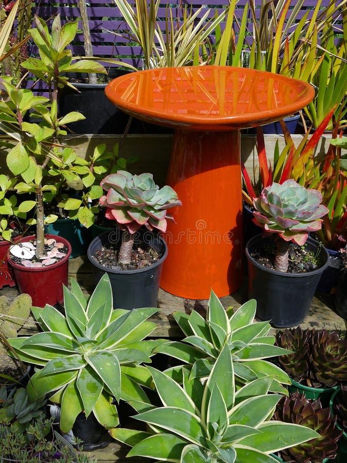 Garden center: subtropical modern plant display stock images