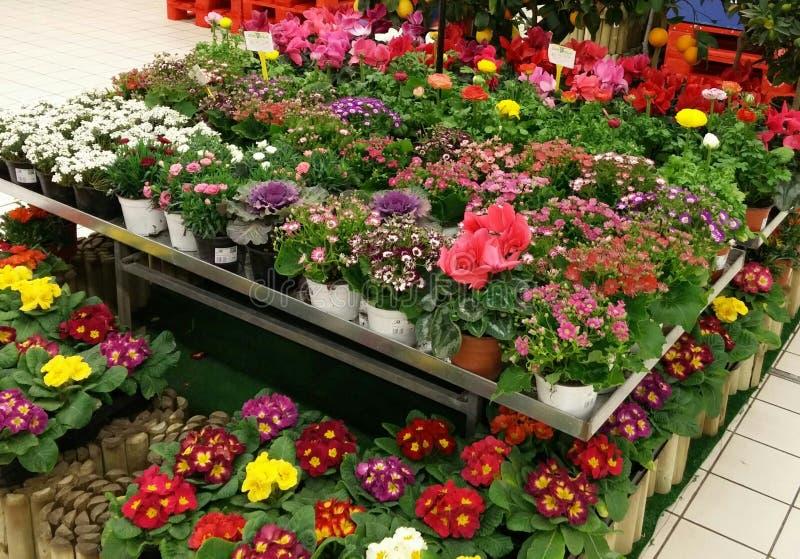 Garden centre royalty free stock photos