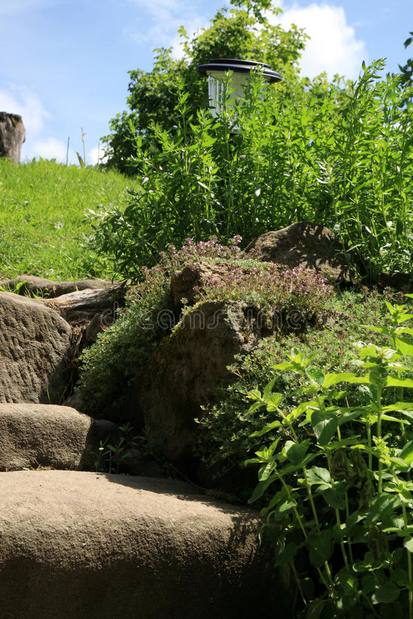 Free Garden Composition With Old Sandstone Stairs And Aromatic Herbs Royalty Free Stock Photography - 85464717