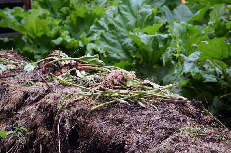 Garden compost. Organic material from the garden is used for the production of domestic compost. In the garden compost can be disposed of all organic waste from royalty free stock photo