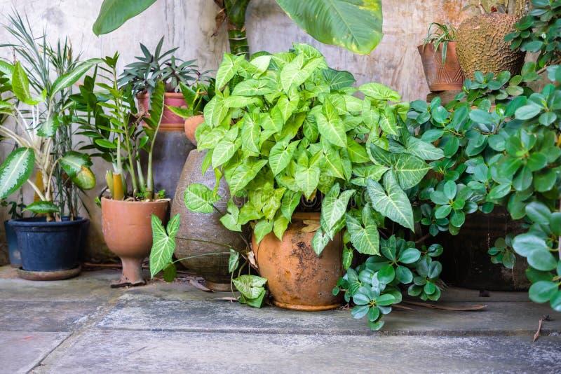 Garden Corner in Thai House. Many plants at garden corner on the balcony in Thai house royalty free stock photos