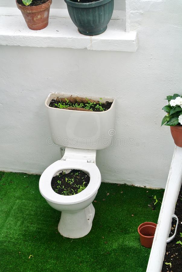 Garden created by recycling bathroom sanitary ware. The garden created by recycling bathroom sanitary ware royalty free stock image