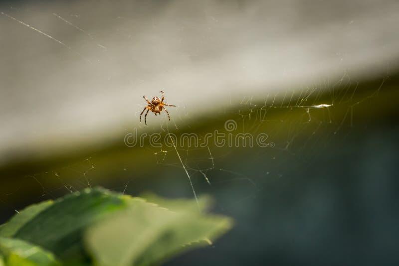 Garden cross spider outdoors in a web. Garden cross spider outdoors in a web bright sunny summer day stock photos