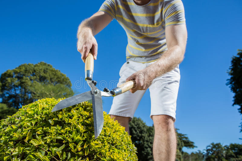 Garden cutting royalty free stock photography