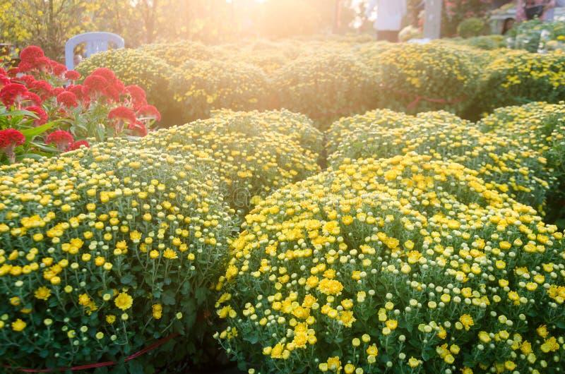 Garden daisies under the sun. royalty free stock photos