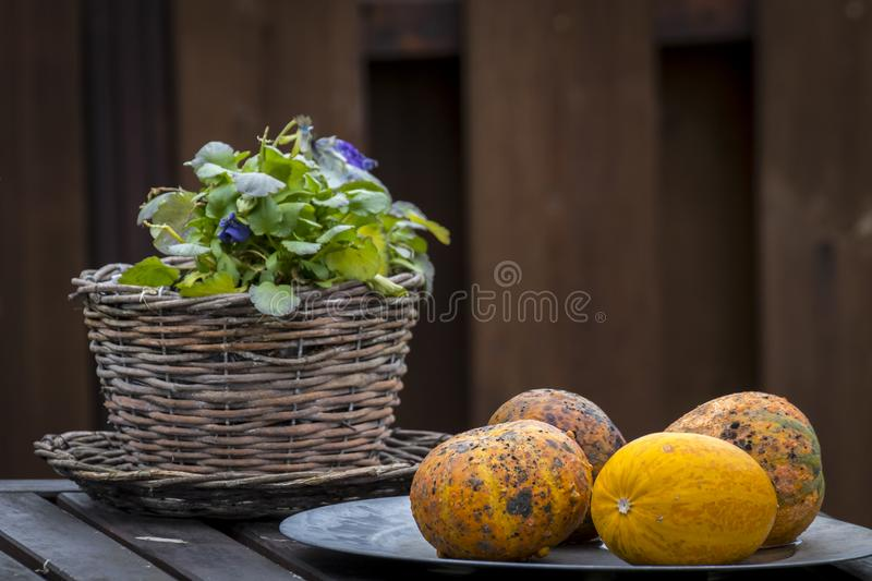 Garden decor objects and vegetables stock images