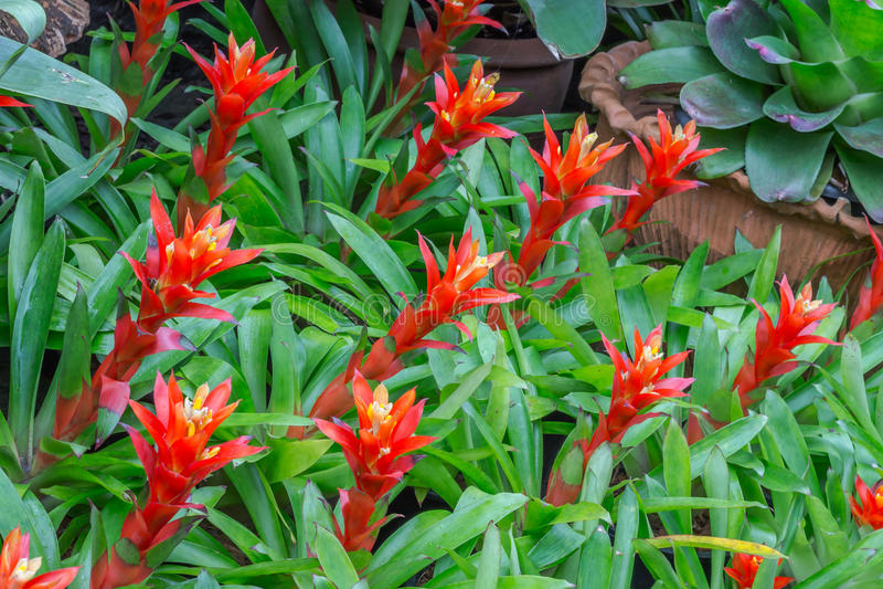 Garden decor styles. Of Nong Nooch Gardens in Pattaya,Thailand royalty free stock photography