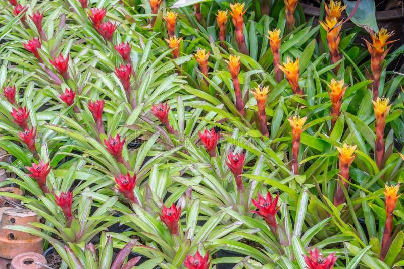 Garden decor styles. Of Nong Nooch Gardens in Pattaya,Thailand stock image