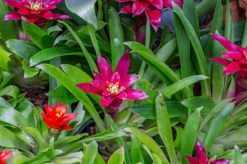 Garden decor styles. Of Nong Nooch Gardens in Pattaya,Thailand stock images